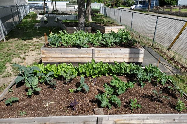 Garden at Arthur Hatton Elementary