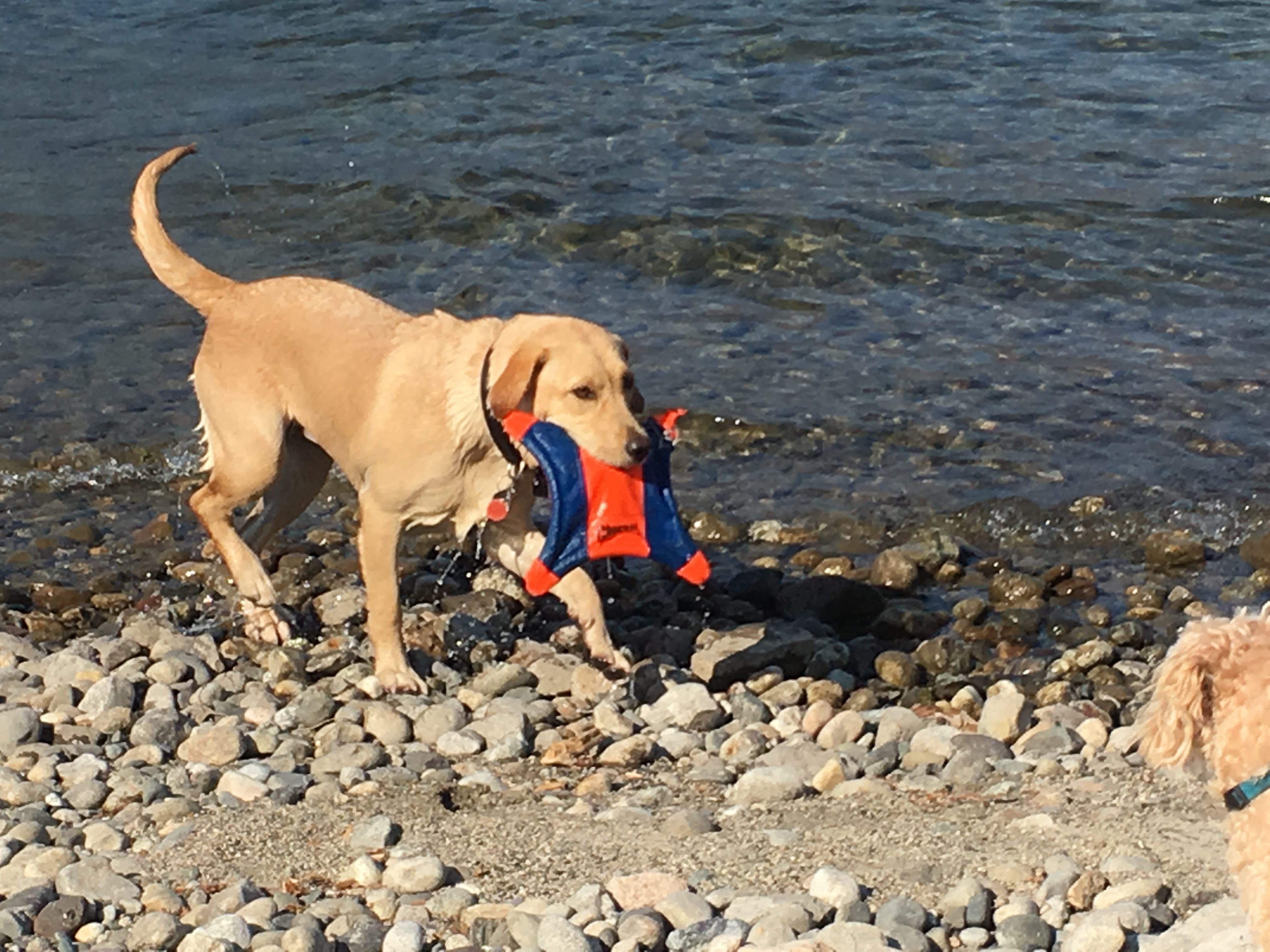 Dog Beach IMG_1064