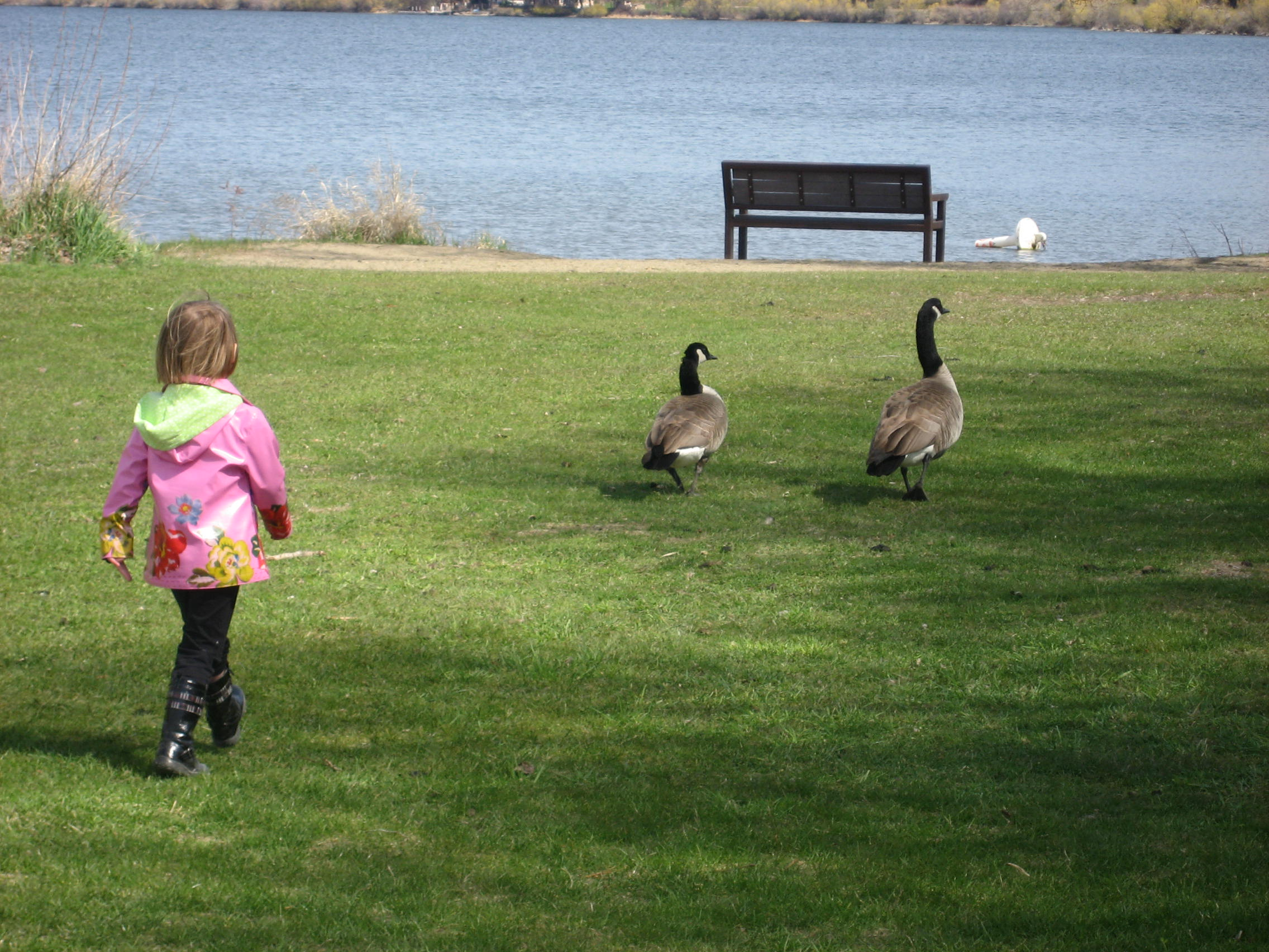 Chasing Ducks Beasley